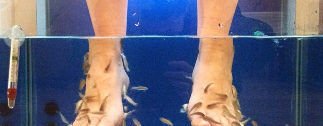 fish pedicure in Florence