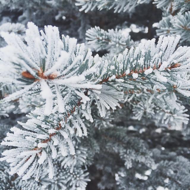 Vsco frost #jacksonhole