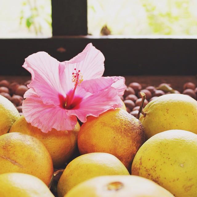 Fresh Hawaii #islandlife #hibiscus