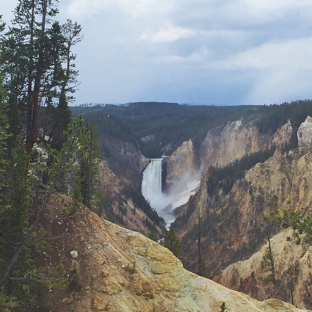 This very cliff in the Grand Canyon of  Yellowstone took three hours to drive to from Jackson. The last time I saw this amazing view was more than 4 years ago with a caravan full of family. #findyourpark