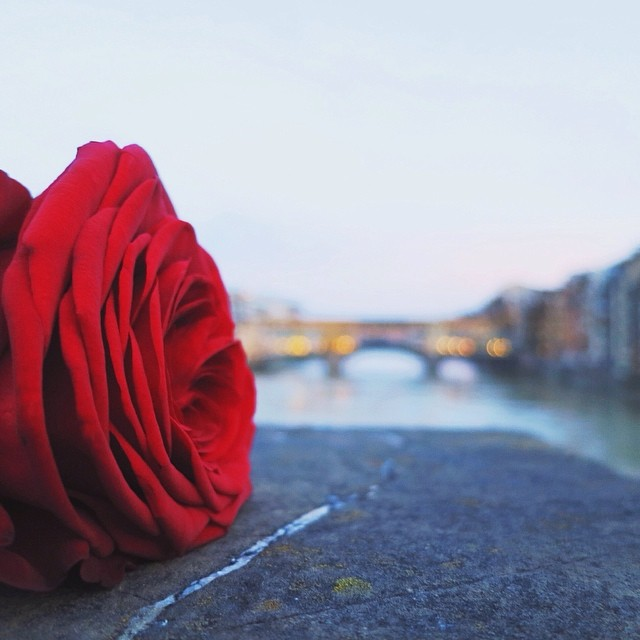 Florence means a lot of things...home, a flower, art, beauty, history, passion. #whatitalyis #bluronpurpose #florence