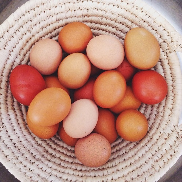 I'm all about Holidays surrounded around eggs. #HappyEaster! #circlegetsthesquare