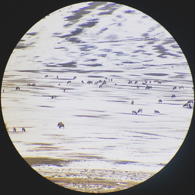 Telescope moment of the Elk Refuge from the @wildlifeartJH Member's Lounge. #circlegetsthesquare #jacksonhole